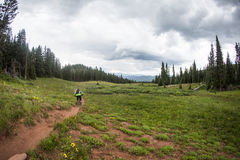 Mountain Biker rides down singletrack trail Royalty Free Stock Images