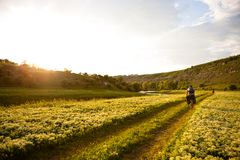 Mountain biker rides in field of yellow flowers. A mountain biker rides in valley with blossoming field of yellow flowers Royalty Free Stock Images