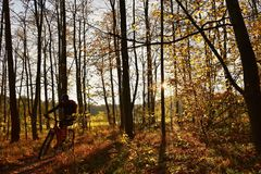 Mountain biker riding in autumn forest. Natural seasonal color background. Royalty Free Stock Images
