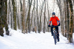 Mountain Biker Riding Bike on the Snowy Trail in Beautiful Winter Forest Royalty Free Stock Images