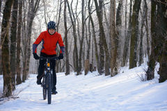 Mountain Biker Riding Bike on the Snowy Trail in Beautiful Winter Forest Royalty Free Stock Photo