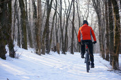 Mountain Biker Riding Bike on the Snowy Trail in Beautiful Winter Forest Stock Images