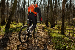 Mountain biker riding on bike in springforest landscape. Stock Images