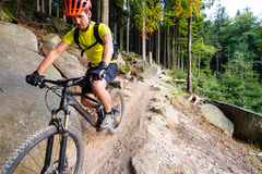 Mountain biker riding cycling in autumn forest Royalty Free Stock Images