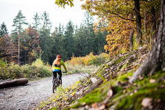 Mountain biker riding cycling in autumn forest Stock Photography