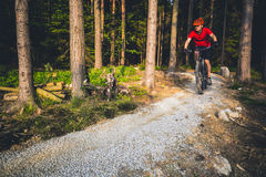 Mountain biker riding cycling in inspiring summer forest Royalty Free Stock Photo