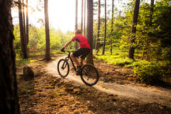 Mountain biker riding cycling in summer forest Royalty Free Stock Photos