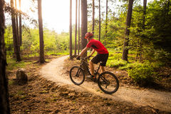 Mountain biker riding cycling in summer forest Royalty Free Stock Images