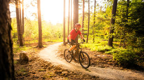 Mountain biker riding cycling in summer forest Royalty Free Stock Image