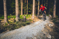 Mountain biker riding cycling in summer forest Stock Image