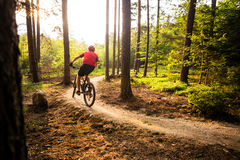 Mountain biker riding cycling in summer forest royalty free stock photo