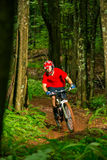 Mountain Biker Riding Down Forest Trail Stock Photo