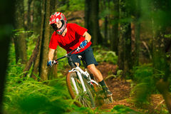 Mountain Biker Riding Down Forest Trail Royalty Free Stock Photography