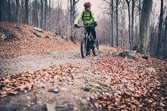 Mountain biker riding on trail in autumn woods Stock Photos