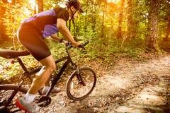 Mountain biker riding trails Royalty Free Stock Photo