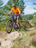 Mountain biker riding trails in Wales Stock Image
