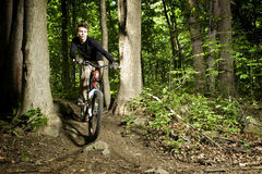 Mountain biker riding through trees Royalty Free Stock Photo