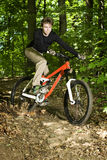 Mountain Biker riding through trees Stock Photos