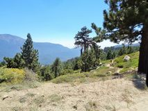Free Mountain Biker Riding Up To Moonridge Royalty Free Stock Images - 122854369