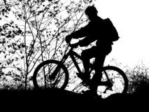 Mountain biker silhouette. With clean sky (this silhouette for use as a backdrop or graphic royalty free stock photo