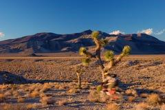 Mountain biker streaks past a Joshua Tree Stock Photos