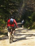 Mountain Bikers. Two Mountain Bikersin the woods Stock Image