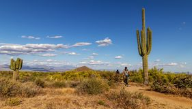 Mountain Bikers On AZ Desert Trail With Cactus. Mountain Bikers On Sunny Arizona Desert Trail With Cactus, Clouds, and blue sky royalty free stock image