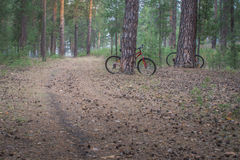 Mountain bikes parked in the woods on a trail at sunrise. Mountain bikes parked in the woods on a trail with sunrise background.  Walking footpath or biking path Royalty Free Stock Photos