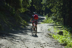 Mountain biking. Biker on a shiny path in the forest royalty free stock image