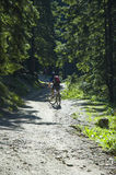 Mountain biking. Bikers on a shiny path in the forest Stock Image