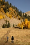 Mountain biking with Aspen trees Stock Image