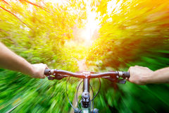 Mountain biking down hill descending on bicycle. Stock Photography