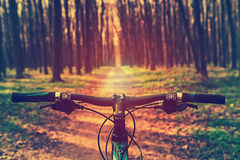 Mountain biking down hill descending fast on bicycle. View from. Bikers eyes Stock Images