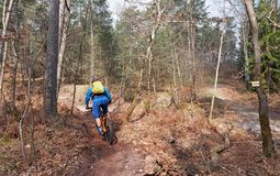 Mountain biking in Fontainebleau forest. Samois hiking trail in Fontainebleau forest Stock Photos