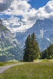 Mountain biking in Grindelwald, switzerland royalty free stock photography