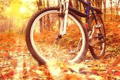 Mountain Biking In Autumn Forest Stock Photography