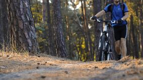 Man cyclist rides paths in the pine forest stock video