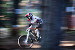 Mountain Biking at Speed. A Mountain Biker powers down the trail at Chicksands emerging from behind tree stock image