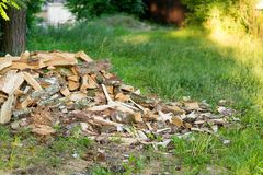 Mountain of birch wood on a green lawn near the forest royalty free stock images