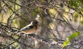 Mountain bird stock photos