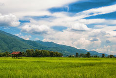 Mountain and blue sky. Mountain and rice field with blue sky Royalty Free Stock Image