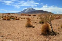 Mountain Bolivia. Mountain Desert Bush Tree Bolivia Royalty Free Stock Image