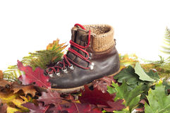 Mountain boot on an autumn leaves carpet. Mountain boots on an autumn leaves carpet with white background Royalty Free Stock Images