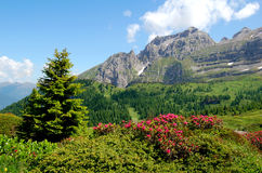 Mountain Brenta-Dolomites Italy. View of the mountain Brenta-Dolomites Italy Stock Photo
