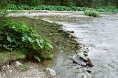Mountain brook. A mountain stream in the High Tatras, Slovakia stock images