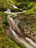 Mountain brook. Mountain lithe brook in green forest Royalty Free Stock Photos