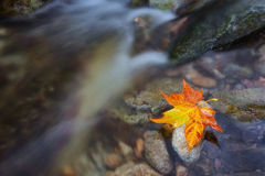 Mountain brook and a maple leaf. Symbol of autumn. Stock Photos