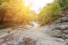 Mountain brook on sunny day Royalty Free Stock Photos