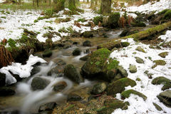 Mountain brook in winter forest Royalty Free Stock Photos