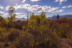 Mountain Brush Royalty Free Stock Photo